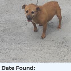 Found dog on 23 Apr 2018 in tallaght.... found, now in the dublin dog pound..Date Found: 20/04/2018