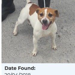 Found dog on 23 Apr 2018 in tallaght. found, now in the dublin dog pound...Date Found: 20/04/2018