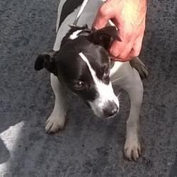Found dog on 23 Aug 2016 in Greenfort Est , Clondalkin. found, now in the dublin dog pound.. Date Found: Monday, August 22, 2016 Location Found: Greenfort Est , Clondalkin