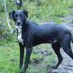 Found dog on 23 Dec 2014 in dublin. found black dog, now in the dublin dog pound