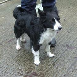 Found dog on 23 Dec 2014 in firhouse. found collie, now in the dublin dog pound,.. Date Found: Monday, December 22, 2014 Location Found: Mount Carmel Park , Firhouse