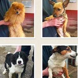 Found dog on 23 Feb 2015 in dublin_... now in the dublin dog pound....