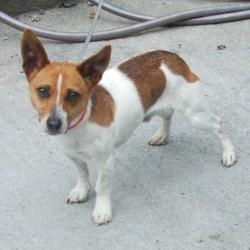 Found dog on 23 Jun 2016 in Village , Tallaght. found now in the dublin dog pound.. Date Found: Wednesday, June 22, 2016 Location Found: Village , Tallaght