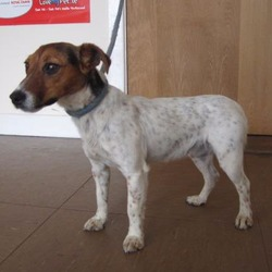 Found dog on 23 Jun 2017 in Enniskerry area.. found..is a female terrier found in the Enniskerry area. Please contact Wicklow Dog Pound at 040444873 for further information.
