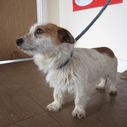 Found dog on 23 May 2017 in  Wicklow town area.. found... male terrier cross found in the Wicklow town area. For further information contact Wicklow Dog Pound at 040444873