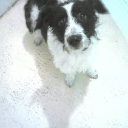 Found dog on 23 Nov 2015 in Trim Rd. Athboy. found..10mt old Terrier X...ref. 503..found on Trim Rd. Athboy...contact Meath pound..