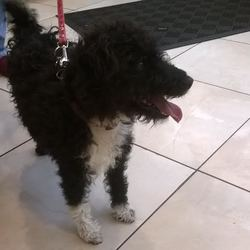 Found dog on 23 Oct 2014 in Clane. Black and white female found Clane Town