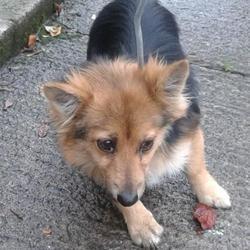 Found dog on 23 Oct 2014 in clondalkin. found now in dublin dog pound.. Date Found: Wednesday, October 22, 2014 Location Found: Clondalkin , Clondalkin