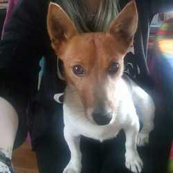Found dog on 24 Oct 2017 in baldoyle. found...Found in Baldoyle now in the dublin dog pound...oct16th