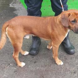 Found dog on 24 Oct 2017 in Village , Clondalkin. found, now in the dublin dog pound... Date Found: Thursday, October 19, 2017 Location Found: Village , Clondalkin