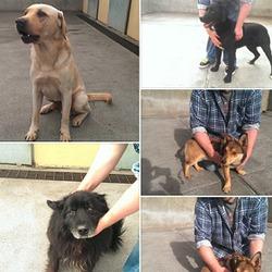 Found dog on 24 Sep 2014 in cavan. FOUND, NOW IN CAVAN POUND