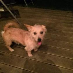 Found dog on 24 Sep 2014 in clonsilla. FOUND MALE - CLONSILLA, D 15 - he is now in Ashton Pound