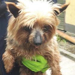 Found dog on 25 Apr 2017 in Ballyowen Est , Lucan. found, now in the dublin dog pound... Date Found: Monday, April 24, 2017 Location Found: Ballyowen Est , Lucan