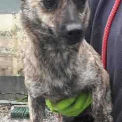 Found dog on 25 Apr 2017 in Clondalkin , Clondalkin. found, now in the dublin dog pound... Date Found: Monday, April 24, 2017 Location Found: Clondalkin , Clondalkin