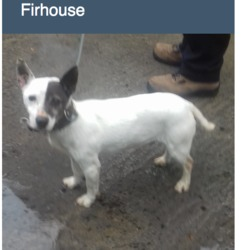 Found dog on 25 Apr 2018 in Firhouse Road. FOUND, NOW in the dublin dog pound..Date Found: 24/04/2018 Location Found: Firhouse Road