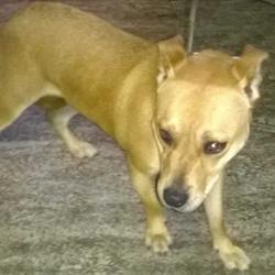 Found dog on 25 Aug 2015 in Village , Clondalkin.... found, now in the dublin dog pound.. Date Found: Saturday, August 22, 2015 Location Found: Village , Clondalkin