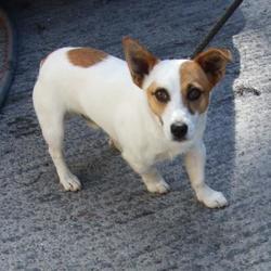Found dog on 25 Aug 2016 in Kiltalown Road , Tallaght. found,... Date Found: Wednesday, August 24, 2016 Location Found: Kiltalown Road , Tallaght