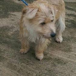 Found dog on 25 Feb 2015 in ballivor. found..2yr old Terrier X....found in Balivor Co Meath....ref 109...contact Meath Pound on 087 0676766...