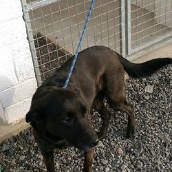 Found dog on 25 Feb 2015 in kilion. found dog male.....approx 6yrs old neutered lab..found in Kilion hill of Down...contact Meath pound if you have any information....087 0676766..
