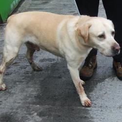 Found dog on 25 Mar 2017 in Drumcairn Est , Tallaght. found, now in the dublin dog pound.. Date Found: Thursday, March 23, 2017 Location Found: Drumcairn Est , Tallaght