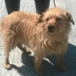 Found dog on 25 May 2016 in Village , Lucan. found,now in the dublin dog pound.. Date Found: