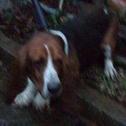 Found dog on 25 Nov 2015 in MacUilliam Gardens , Tallaght...... found, now in the dublin dog pound... Date Found: Monday, November 23, 2015 Location Found: MacUilliam Gardens , Tallaght