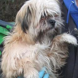 Found dog on 25 Nov 2016 in Heatherview , Tallaght. found, now in the dublin dog pound.. Date Found: Thursday, November 24, 2016 Location Found: Heatherview , Tallaght