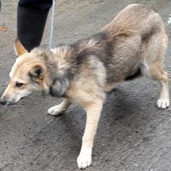 Found dog on 25 Oct 2017 in Aylmer Road , Newcastle . found, now in the dublin dog pound... Date Found: Tuesday, October 24, 2017 Location Found: Aylmer Road , Newcastle