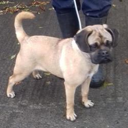Found dog on 25 Oct 2017 in Main Road , Tallaght../. found, now in the dublin dog pound.... Date Found: Tuesday, October 24, 2017 Location Found: Main Road , Tallaght