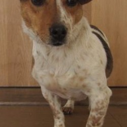 Found dog on 25 Sep 2017 in Rathdrum area. found...) is a male Jack Russell crossbreed found in the Rathdrum area. Please contact Wicklow Dog Pound at 0404 44873 for further information.