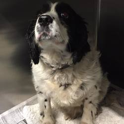 Found dog on 26 Feb 2018 in Dunboyne Castle. found...Active VetCare