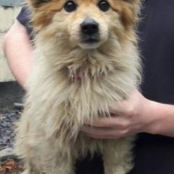 Found dog on 26 Jun 2017 in Firhouse , Tallaght. found, now in the dublin dog pound.. Date Found: Friday, June 23, 2017 Location Found: Firhouse , Tallaght