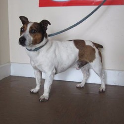 Found dog on 26 Jun 2017 in Roundwood. found,....a male terrier cross found in the Roundwood area. Please contact Wicklow Dog Pound at 040444873 for further information.