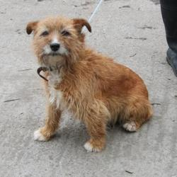 Found dog on 26 Mar 2015 in Kingswood Tallaght. found terrier, now in the dublin dog pound.. Date Found: Wednesday, March 25, 2015 Location Found: Dunmore Park , Kingswood Tallaght