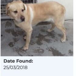 Found dog on 26 Mar 2018 in Belgard. found, now in the dublin dog pound...Date Found: