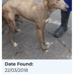 Found dog on 26 Mar 2018 in Corbally Square, Saggart. found...Date Found: