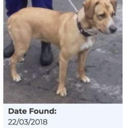 Found dog on 26 Mar 2018 in Glenshane Gardens, Tallaght. found now in the dublin dog pound..Date Found: