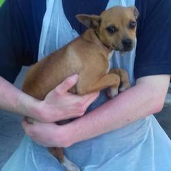 Found dog on 26 May 2017 in Cherryfield Way , Templeogue. found, now in the dublin dog pound... Date Found: