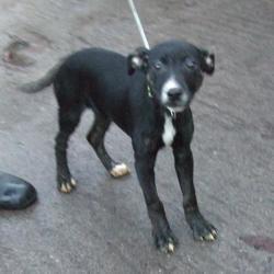 Found dog on 26 Nov 2014 in tallaght. found black,white terrier now in dublin dog pound... Date Found: Monday, November 24, 2014 Location Found: Main Street , Tallaght