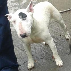 Found dog on 26 Sep 2014 in tallaght. found,now in dublin dog pound.. Date Found: Thursday, September 25, 2014 Location Found: Sundale Est , Tallaght