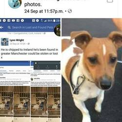 Found dog on 26 Sep 2017 in manchester. found manchester, chipped to ireland..https://www.facebook.com/photo.php?fbid=10209538717967122&set=a.2237475978708.2103738.1302248245&type=3&theater