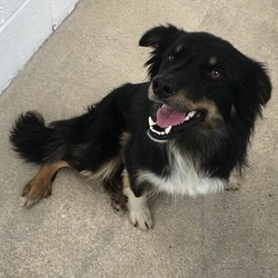 Reunited dog 26 Sep 2017 in Woodtown Drumcondrath Co. Meath. UPDATE REUNITED....found... 2yr old Collie...found in Woodtown Drumcondrath Co. Meath ref 276...please contact Meath pound on 087 0676766. Thanks..