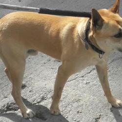 Found dog on 27 Apr 2017 in Kiltalown Est , Tallaght. found, now in the dublin dog pound... Date Found: Wednesday, April 26, 2017 Location Found: Kiltalown Est , Tallaght