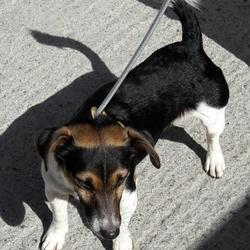 Dog looking for home 27 Apr 2017 in DUBLIN_POUND. UPDATE.....SURRENDERED....found, now in the dublin dog pound... Date Found: