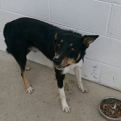 Found dog on 27 Aug 2015 in Dunderry. found .ref. 373, male collie, found Dunderry. Please contact Meath pound on 087 0676766.