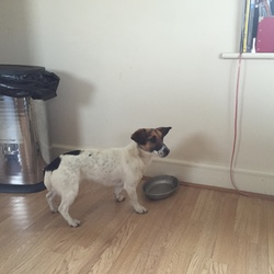 Found dog on 27 Feb 2016 in Lucan Co.Dublin. Found,Date Found:  February 27th 2016 Location Found: Lucan Adamstown area please contact me on 0860527877 for more info .