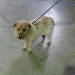 Found dog on 27 Jan 2015 in dunboyne. found terrier 2yr old approx female Terrier x...brought in from Dunboyne vets..ref 52....contact Meath pound