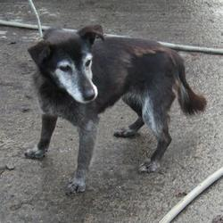 Found dog on 27 Jan 2015 in tallaght. found, now in the dublin dog pound... Date Found: Monday, January 26, 2015 Location Found: Main Raod , Tallaght