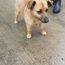 Found dog on 27 Mar 2014 in kilcloon. 1yr old female Terrier X....ref 181 found in Kilcloon Co. Meath...very gentle little girl ..if you can help this girl please contact Meath pound on 087 0676766