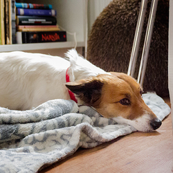 Found dog on 27 Mar 2015 in Dublin. Found around Liffey Valley Shopping Centre parking area. Very friendly, found limping on its back left leg and with no collar. No microchip, around 3 years old, maybe JRT + spaniel cross(?).